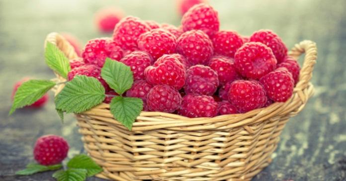 """""""Малина сприяє схудненню"""". Медики розповіли про приховану користь солодкої ягоди"""
