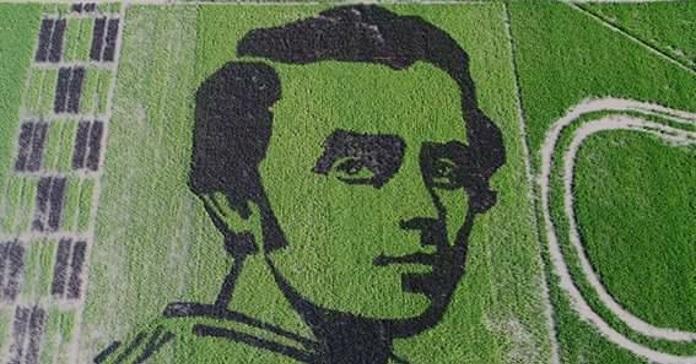 Українські вчені виростили на Херсонщині портрет Шевченка з рису