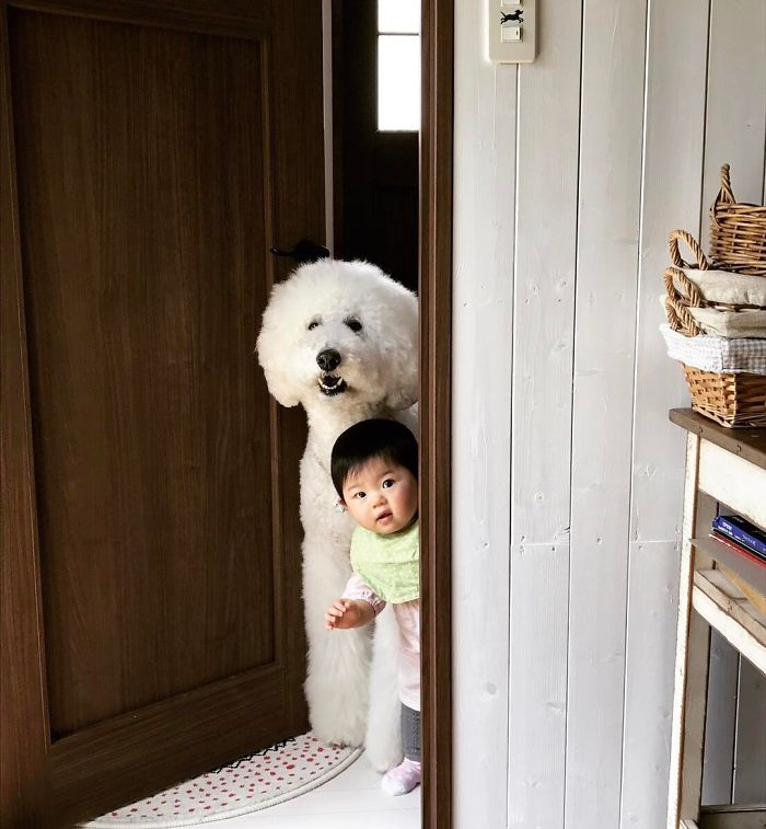 girl-poodle-dog-friendship-mame-riku-japan-13-59819d4839265__700