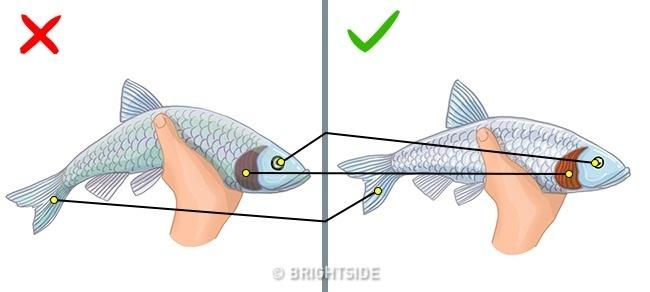 Це потрібно знати. Популярні видів риби, які приносять скоріш шкоду, ніж користь, фото-10