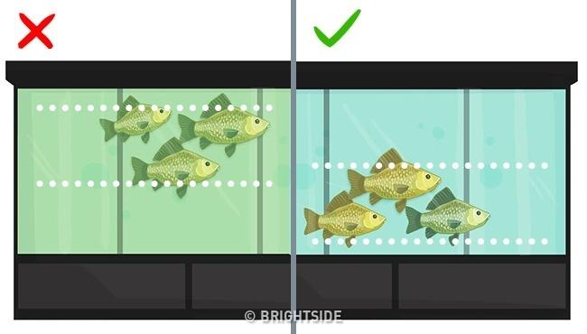 Це потрібно знати. Популярні видів риби, які приносять скоріш шкоду, ніж користь, фото-11