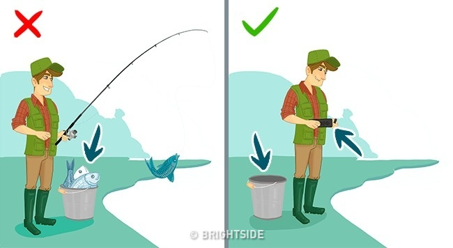 Це потрібно знати. Популярні видів риби, які приносять скоріш шкоду, ніж користь, фото-12