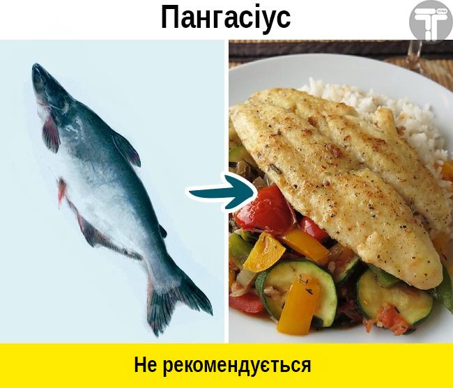 Це потрібно знати. Популярні видів риби, які приносять скоріш шкоду, ніж користь, фото-6