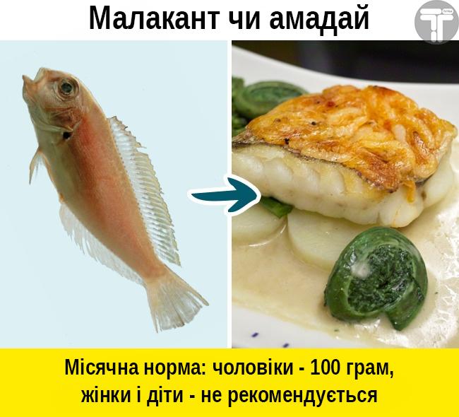 Це потрібно знати. Популярні видів риби, які приносять скоріш шкоду, ніж користь, фото-7